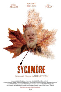 Sycamore<p>(Turkey)